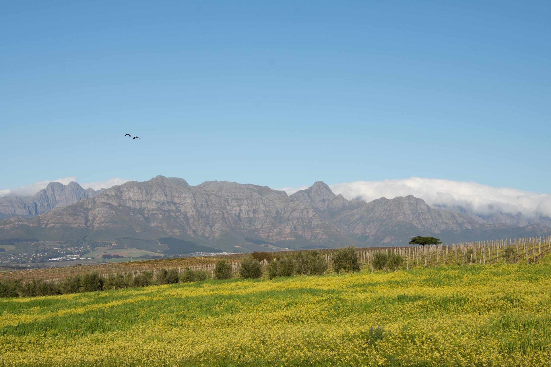 Winelands-Suedafrika-Globetrotter-Select-1