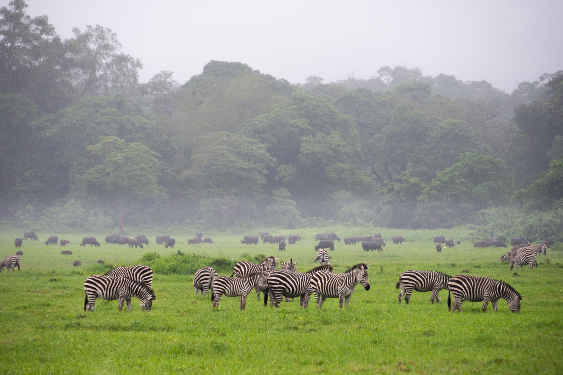 Arusha Nationalpark in Tansania