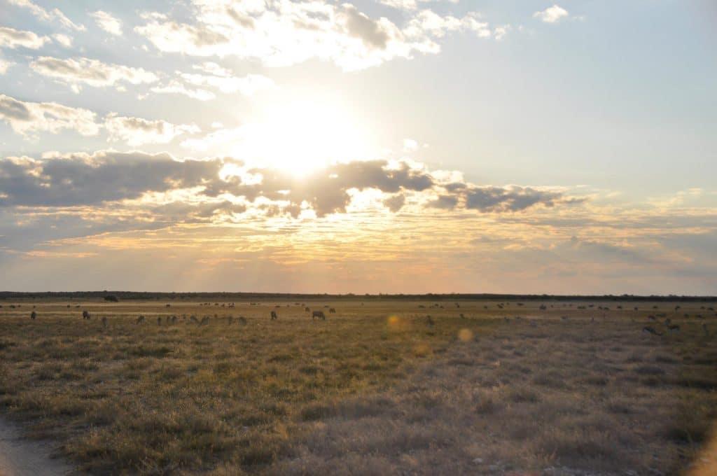 Central Kalahari in Botswana