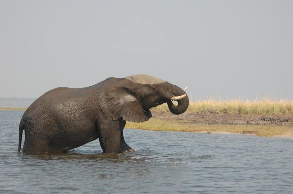 Chobe Nationalpark in Botswana