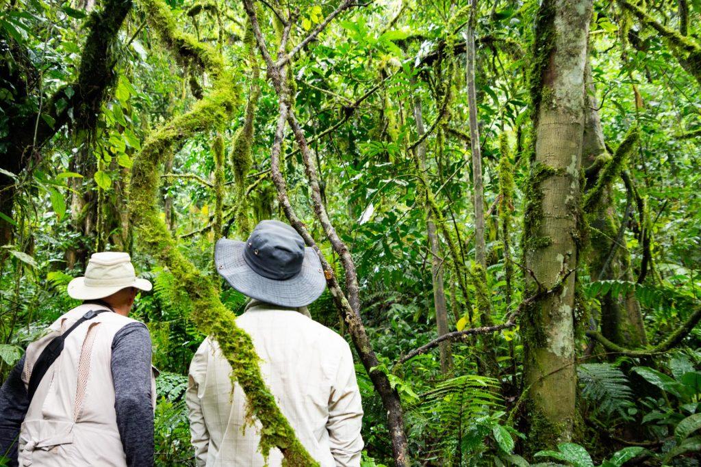 Gorilla Safari im Bwindi Nationalpark in Uganda