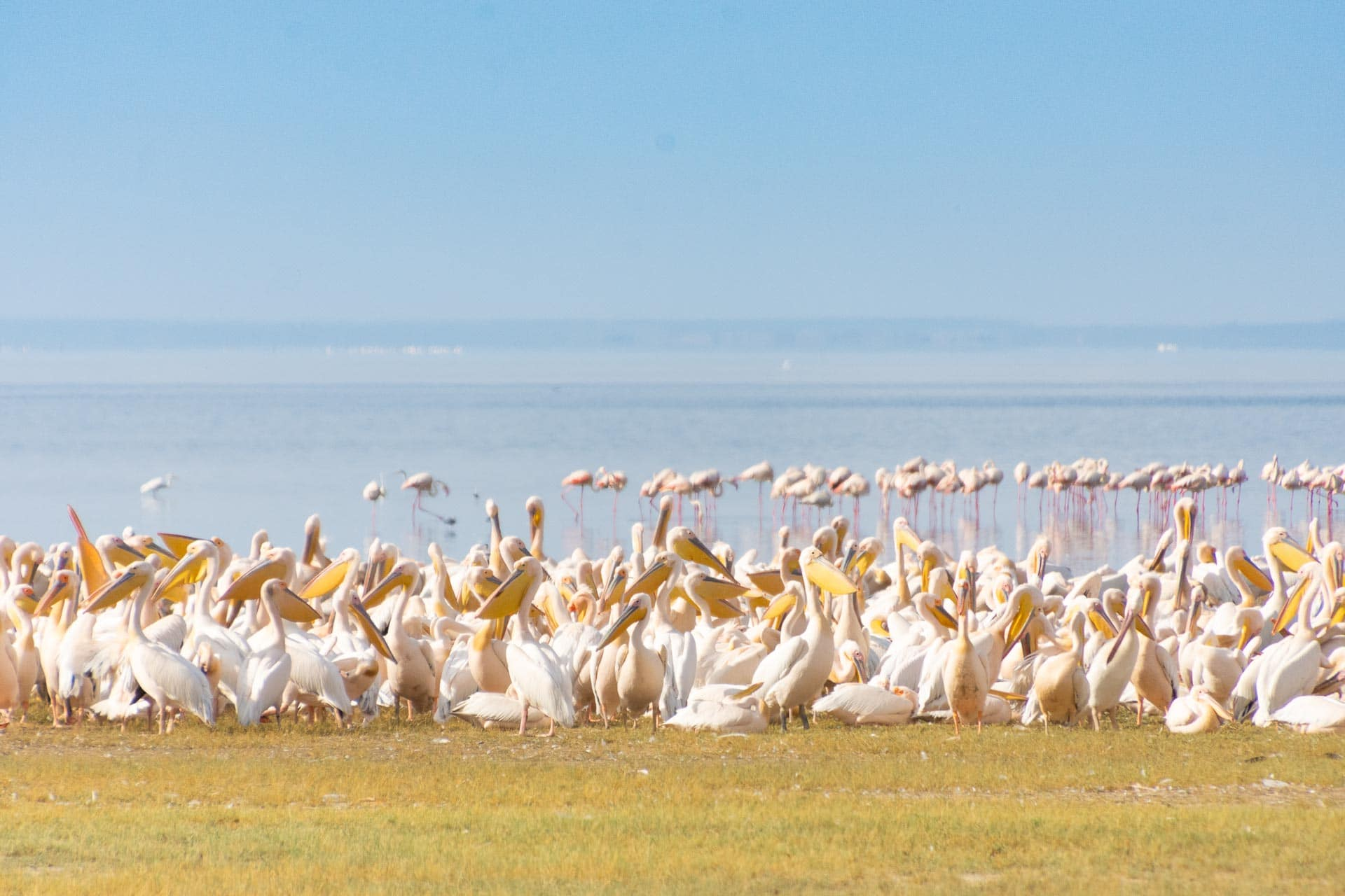 Lake Manyara in Tansania