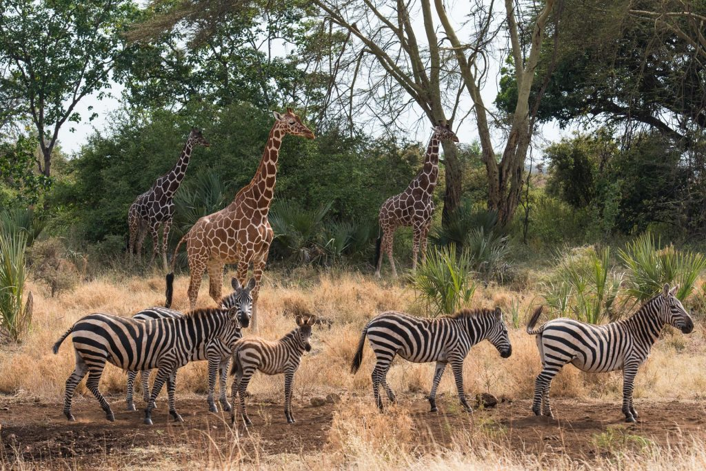 Meru Nationalpark in Kenia