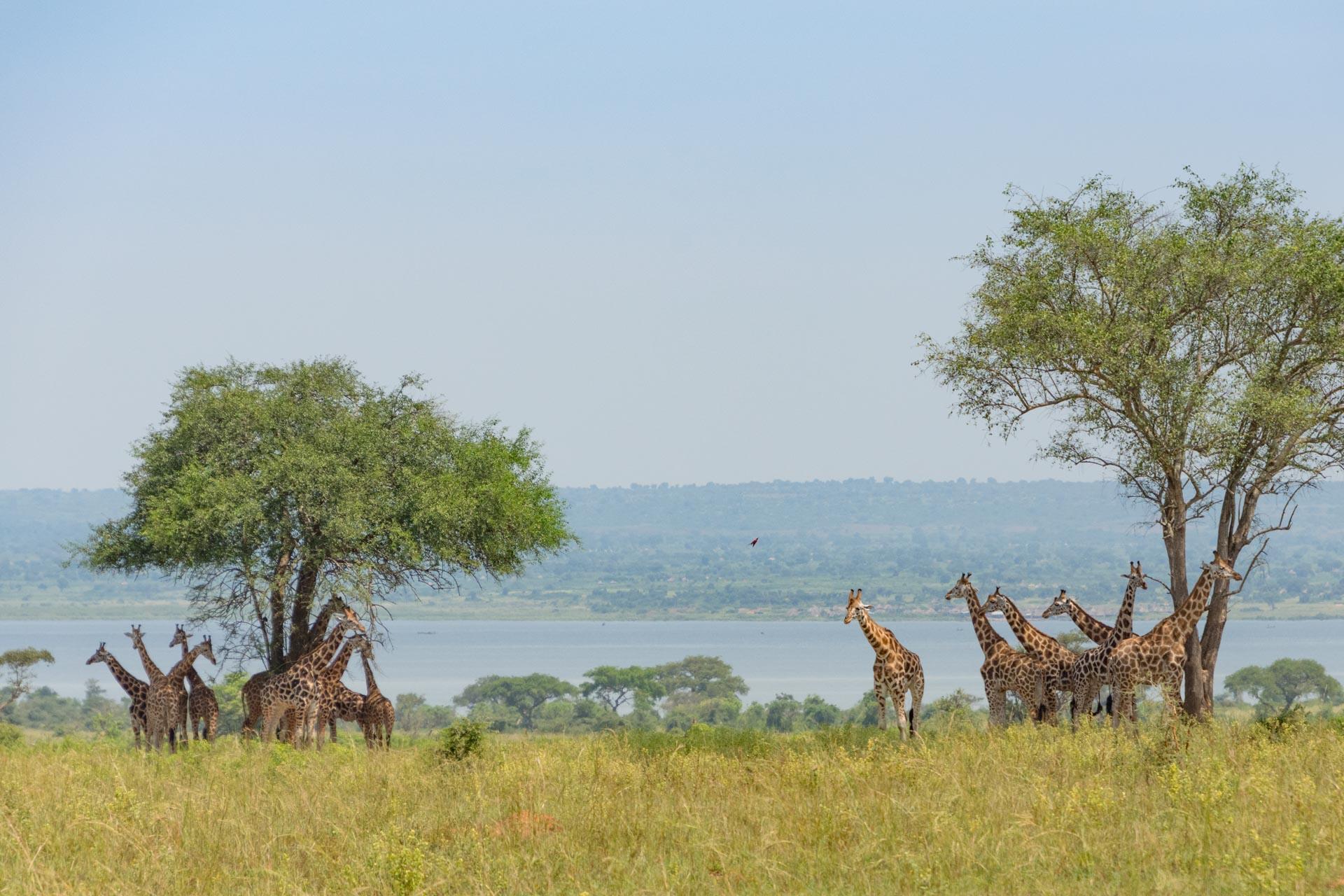 Murchison Falls Nationalpark in Ugandat