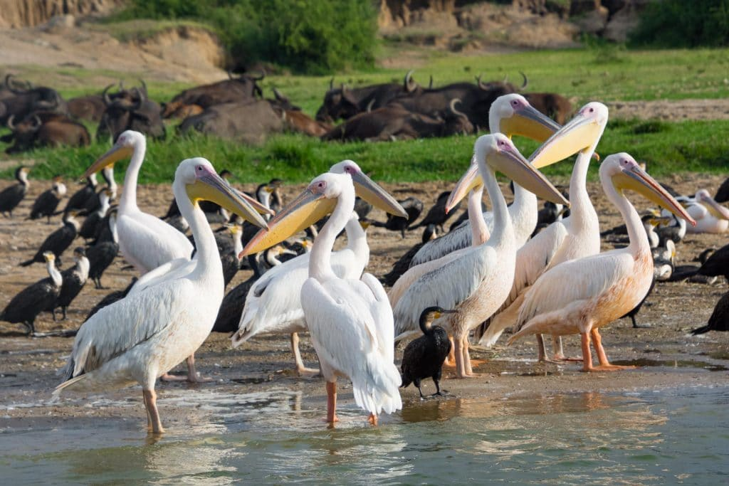 Queen Elisabeth Nationalpark in Uganda
