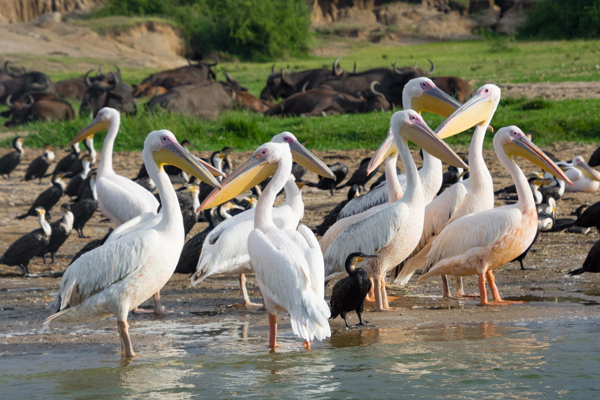 Queen Elisabeth Nationalpark in Uganda