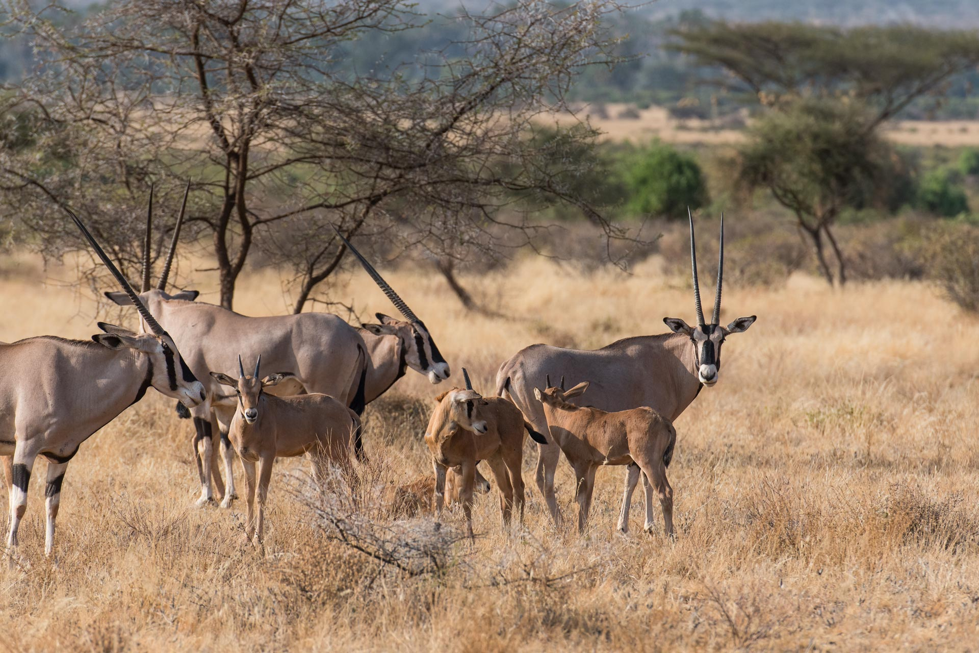 Samburu Nationalpark in Kenia