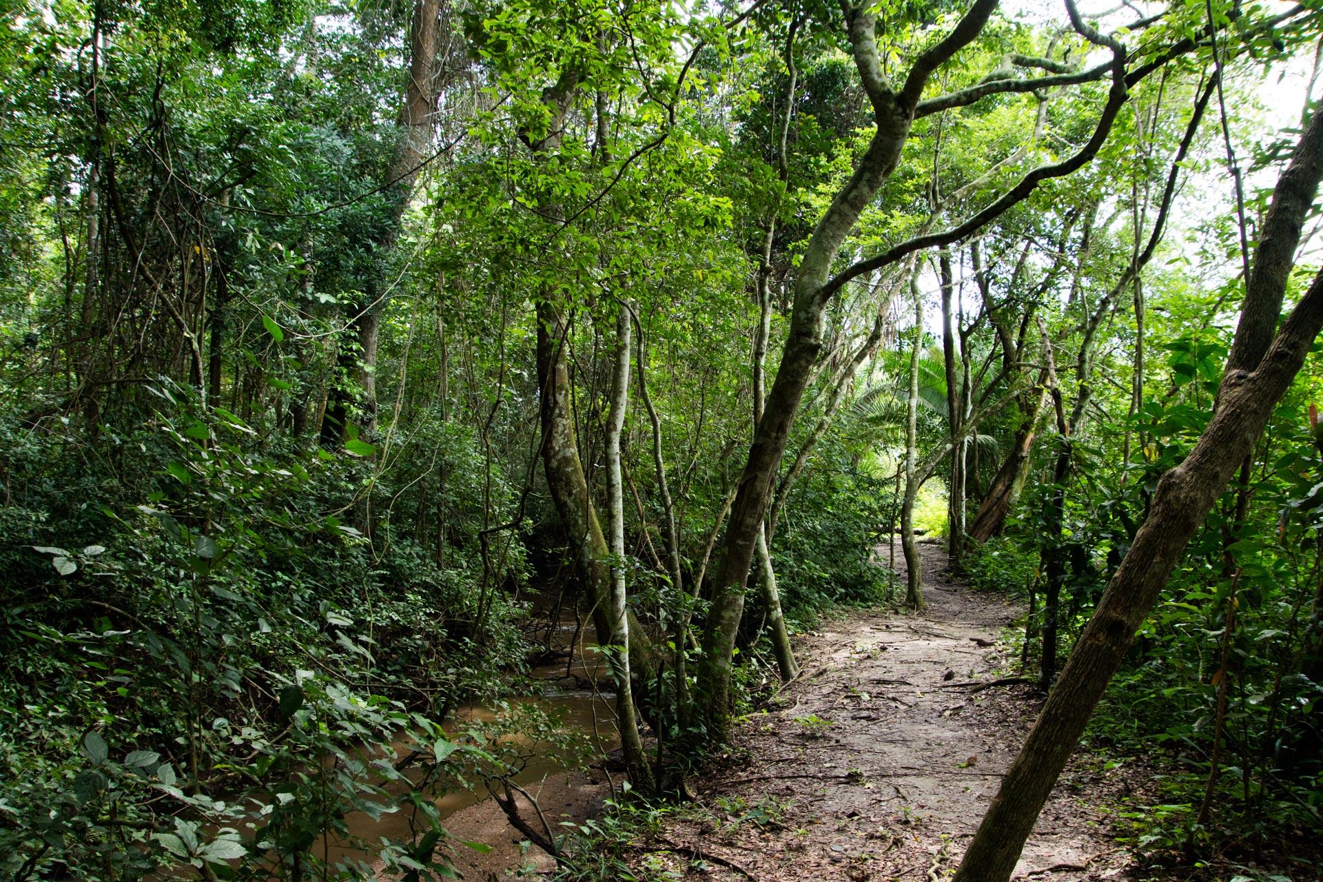 Semliki Nationalpark in Uganda