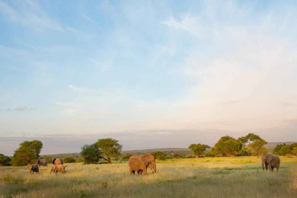 Tarangire Nationalpark in Tansania